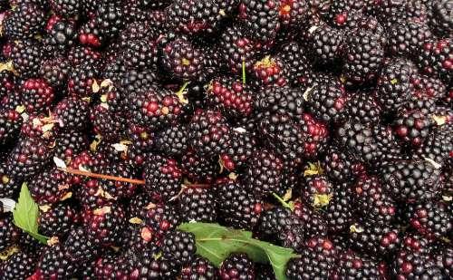 Blackberry Blackberries Berries Health Berry