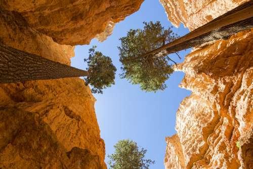 Brice Canyon Rocks Trees Tree Park Nature