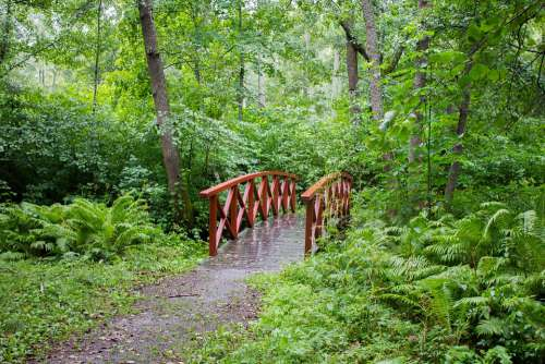 Bridge Red Green Nature Landscape Trees Forest