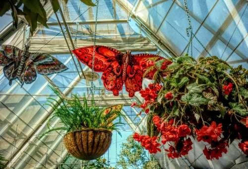 Butterflies Flowers Nature Hanging Baskets