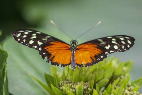 Butterfly Wings Orange Insect Animal Nature Wing