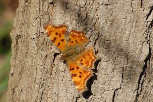 Butterfly Insect Butterflies Ali