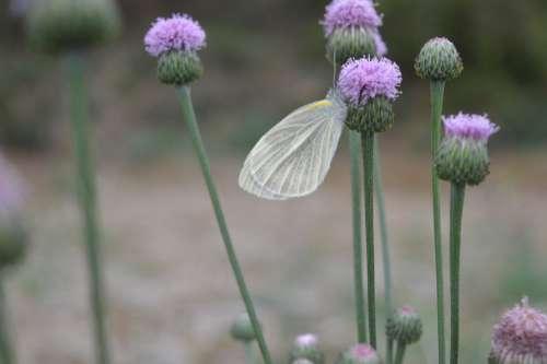 Butterfly Flower Purple