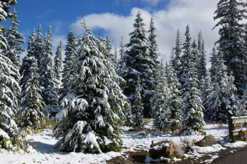 Canada Landscape Trees Snow Forest Hiking