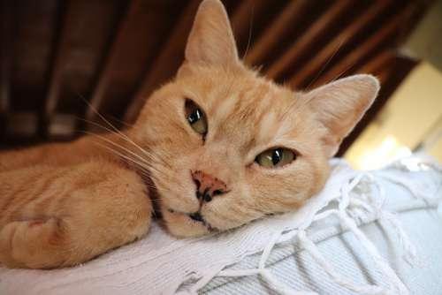 Cat Feline House Rest Cats