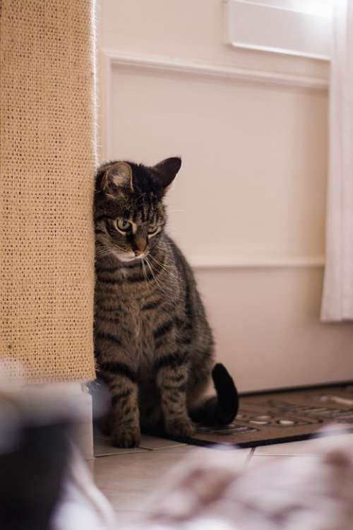 Cat Animals Kitten Domestic Cat Portrait Curious