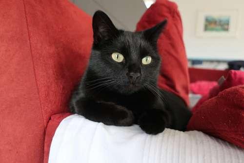 Cat Cat'S Eyes Lying Cat Sofa Relaxed