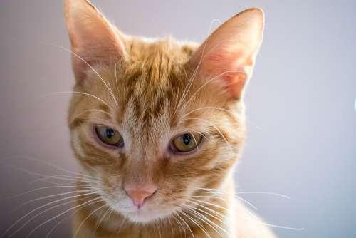Cat Eyes Pet Face Head