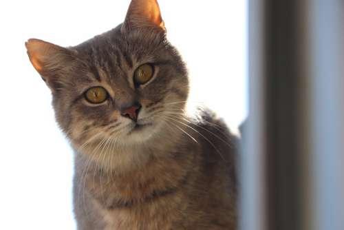 Cat Animals Cute Portrait Fur Leather Dangerous