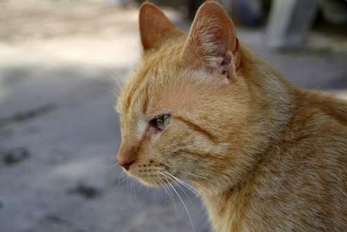 Cat Pets Animals Pet Cats