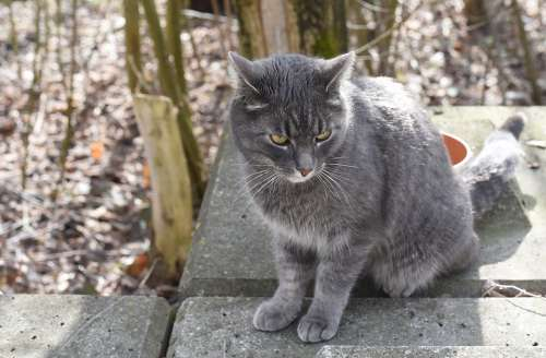 Cat Grey Forest Concrete