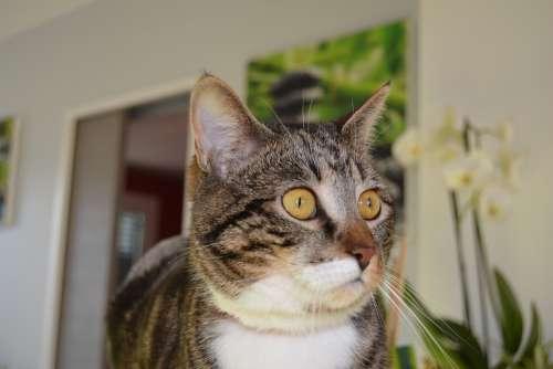 Cat Eyes Feline To Watch