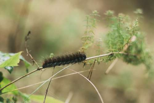 Caterpillar Macro Forest Insect Greens