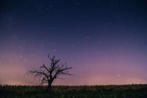 Celebrities Meteor Milky Way Lone Tree