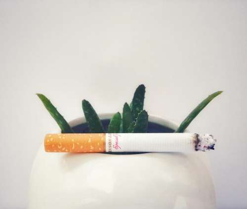 Cigarettes Smoking Plant Aloe