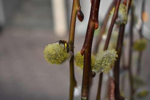 Close Up Bee Nature Flower Garden