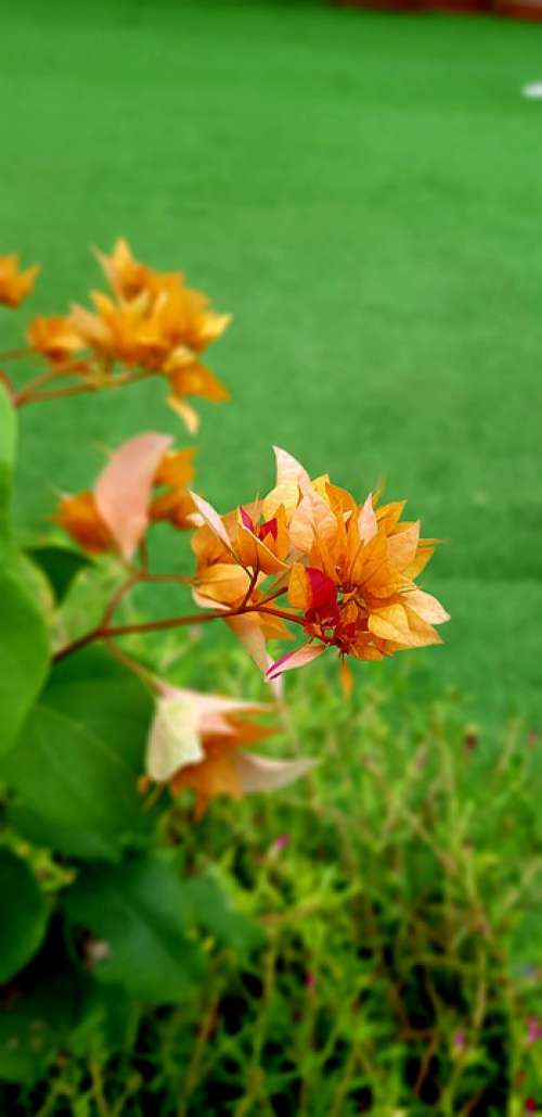 Closures Green Summer Orange Nature Yellow
