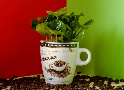 Coffee Coffee Plant Coffee Beans Cup Nature Green