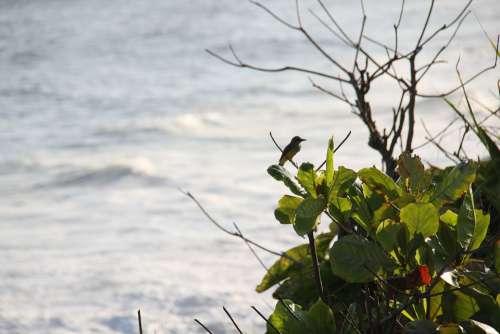 Copacabana Brazilwood Ocean Bird Marin Landscape