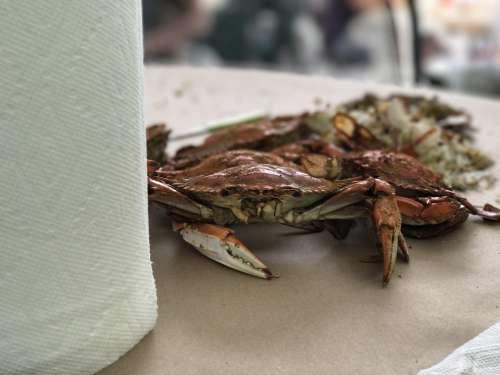 Crab Feast Dinner Fresh