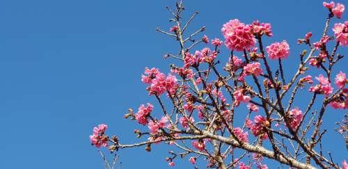 Curitiba Sakura Photo Sky Blue Summer Surreal