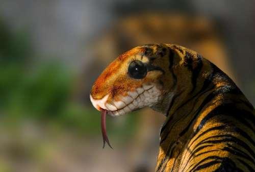 Digiart Photomontage Composing Image Editing Tiger