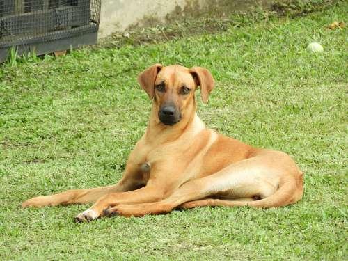 Dog Black And White Pet Armenia