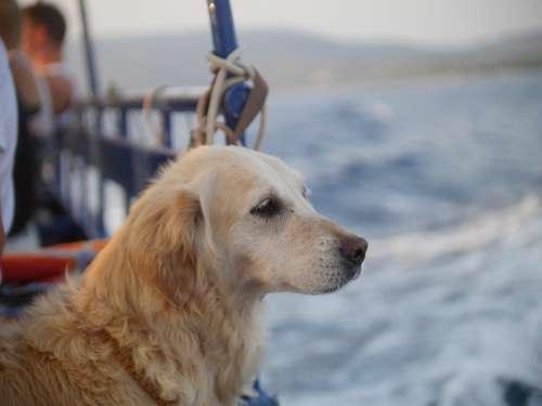 Dog Sea Cres Water Pet Sky Nature Ocean