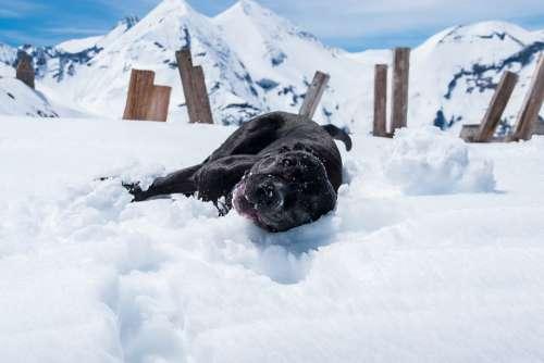 Dog Snow Happy Doggy Style Pet Animal