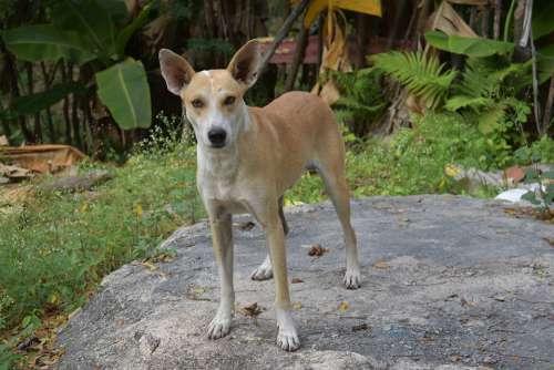 Dog Animal Animals Puppy Pets Cute Pet Dogs