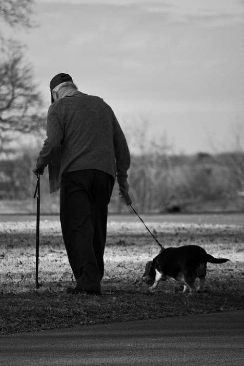 Dog Old Man Walk Elderly Pet