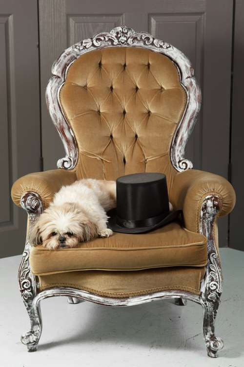 Dog Chair Top Hat Puppy Pet Furniture Chairs
