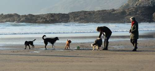 Dogs Playing Beach Water Pet Fun Happy Family