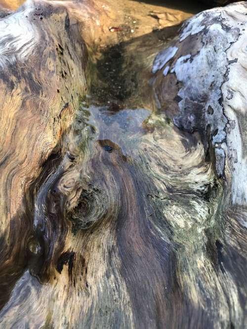 Driftwood Tree Texture Coastal Nature Weathered