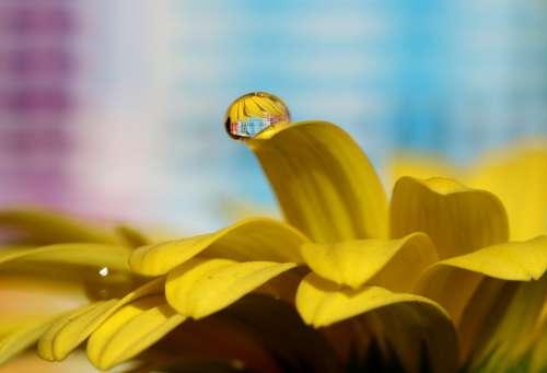 Drops Water Macro Flower Refractive Petals Yellow