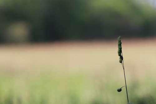 Ear Landscape Nature Venn