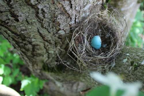 Egg Robin Spring Easter Blue Nature Nest Pastel