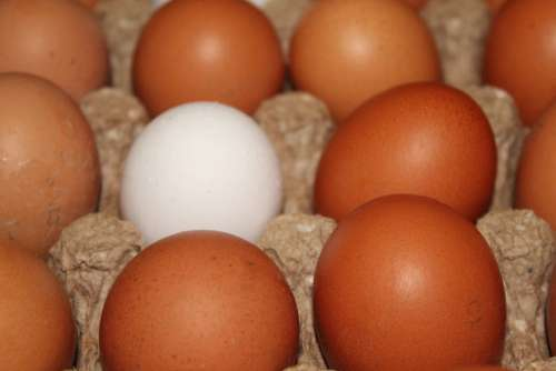 Eggs Chicken Egg Food Nutrition Easter There Are