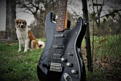 Electric Guitar Guitar Music Band Rock Musician