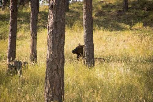 Elk Forest Nature Wildlife Animal Deer Wild
