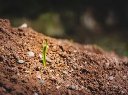 Engine Bud Earth Soil New Beginning Spring Nature