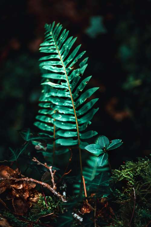 Fern Green Nature Leaves Plants Texture