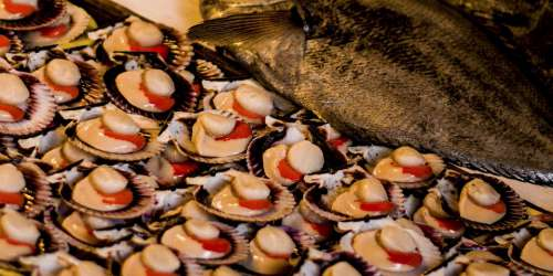 Fish Sea Fruit Sea Lunch Fruit Seafood