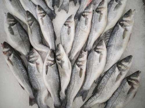 Fish Fresh Food Healthy Delicious Kitchen Raw