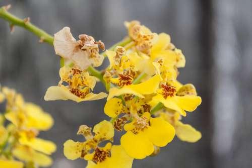 Flower Flowers Orchid Plant Nature Beauty