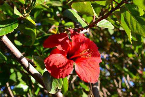 Flower Red Morocco Perfume Color Plants Beauty