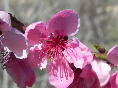 Flower Spring Peach Flowers Rosa Flourishing