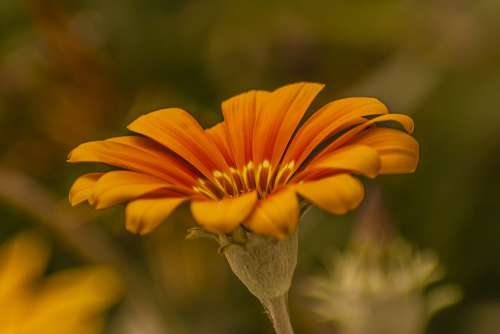 Flower Nature Spring Garden Petals
