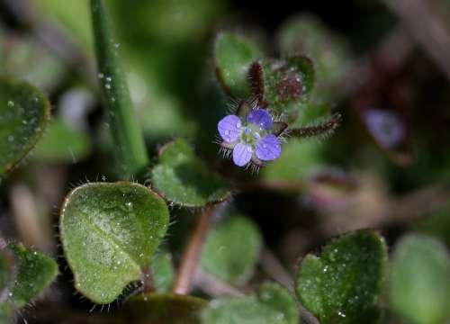 Flower Blue Violet Spring Coloring Nature