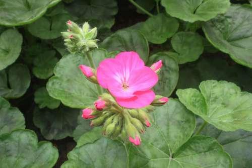 Flower Day New Year Vietnam End Year